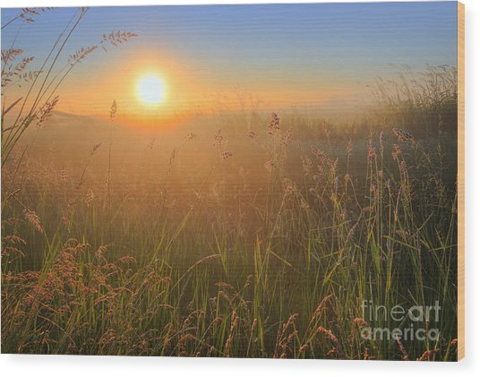 Tall Grasses Wood Print