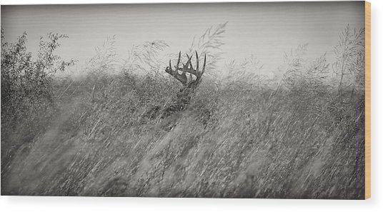 Tallgrass Whitetail Wood Print