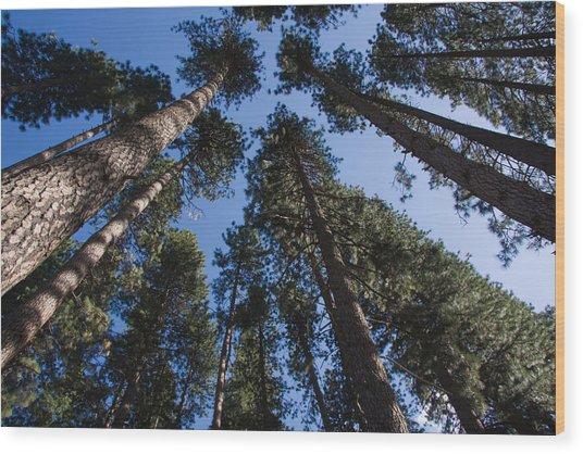 Talls Trees Yosemite National Park Wood Print