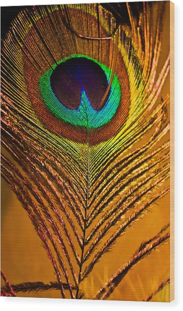 Tan Feather Wood Print