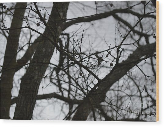 Tangled Wood Print by Catherine Peterson
