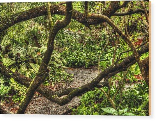 Tangled Path Wood Print