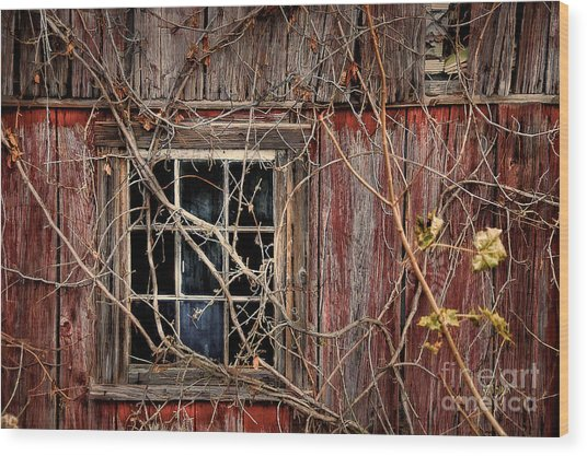 Wood Print featuring the photograph Tangled Up In Time by Lois Bryan