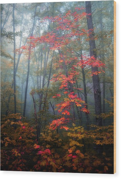 Tanglewood Forest Wood Print by William Schmid