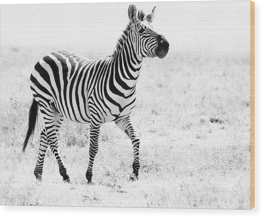 Tanzania Zebra Wood Print