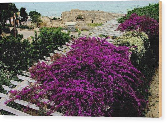 Tarragona Roman Amphitheater Wood Print by Jacqueline M Lewis