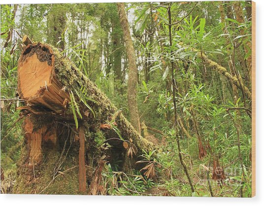 Tasmanian Rain Forest All Profits Go To Hospice Of The Calumet Area Wood Print