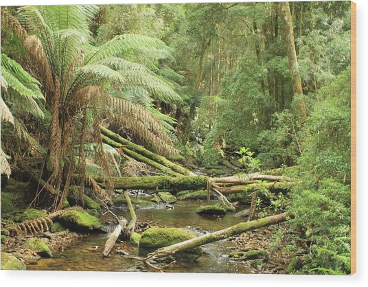 Tasmanian Rain Forest River All Profits Go To Hospice Of The Calumet Area Wood Print