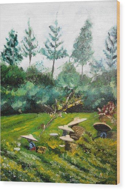 Tea Plantation In Indonesia Wood Print