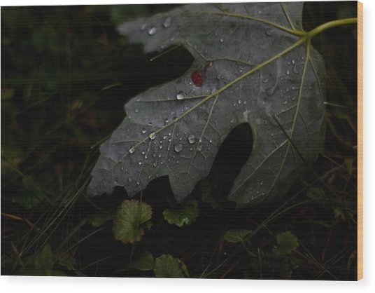 Tears Of A Leaf Wood Print by Michael Murphy