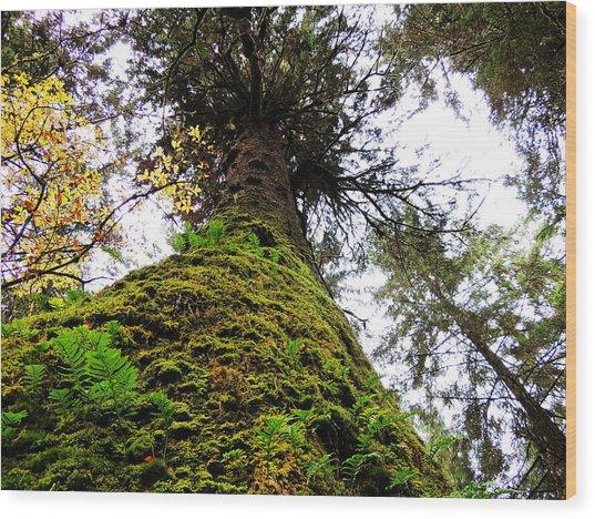 Tell Me Tree Wood Print