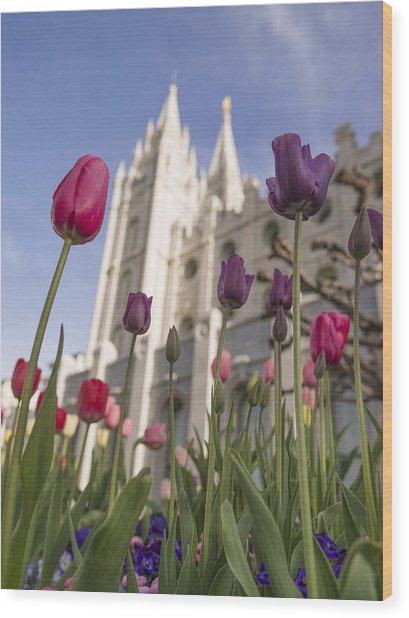 Temple Tulips Wood Print