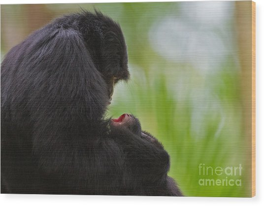 Tender Moments Wood Print by Ashley Vincent