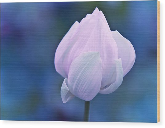 Tender Morning With Lotus Wood Print