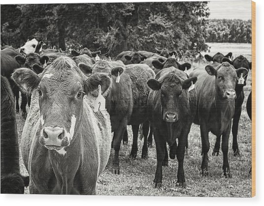 Tennessee Cattle Wood Print