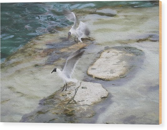 Tern On The Shore Wood Print