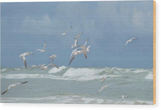 Terns In Flight Wood Print