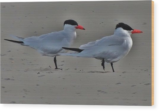 Terns In The Wind Wood Print by Helen Carson