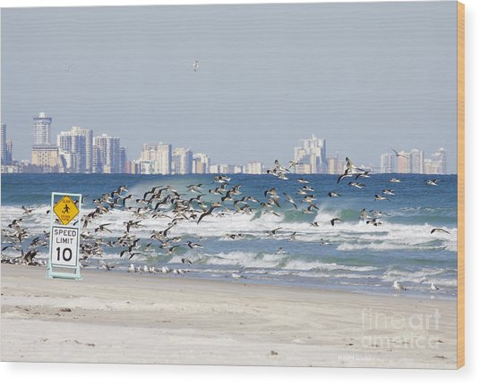 Terns On The Move Wood Print