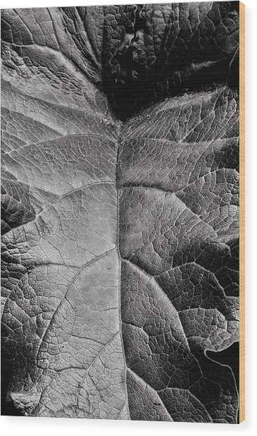 Terrestrial  Wood Print by JC Findley