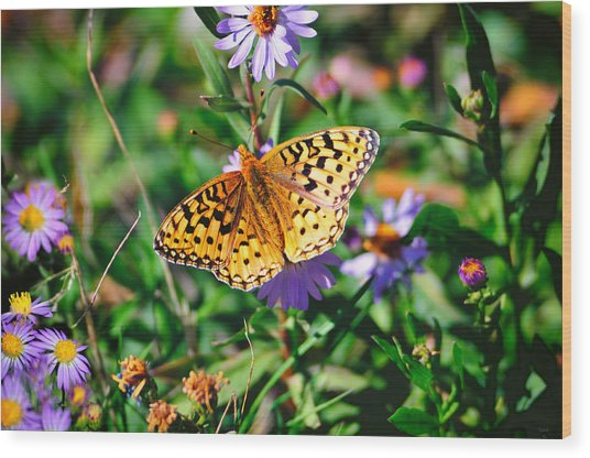 Teton Butterfly Wood Print