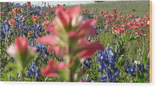 Texas Beauties Wood Print