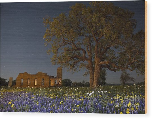 Texas Blue Bonnets At Night Wood Print