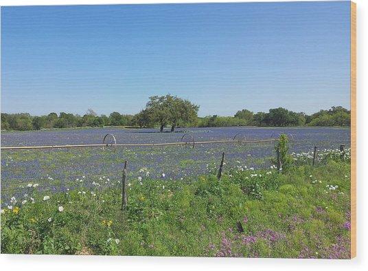 Texas Blue Bonnets Wood Print