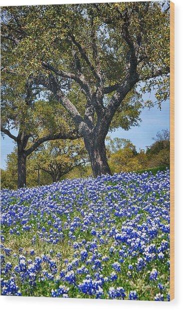 Texas Bluebonnet Hill Wood Print