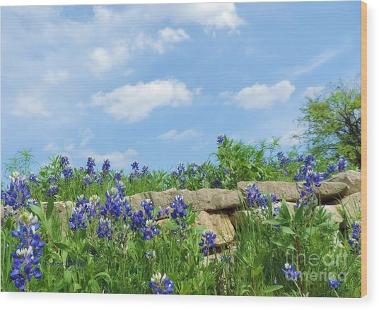 Texas Bluebonnets 08 Wood Print