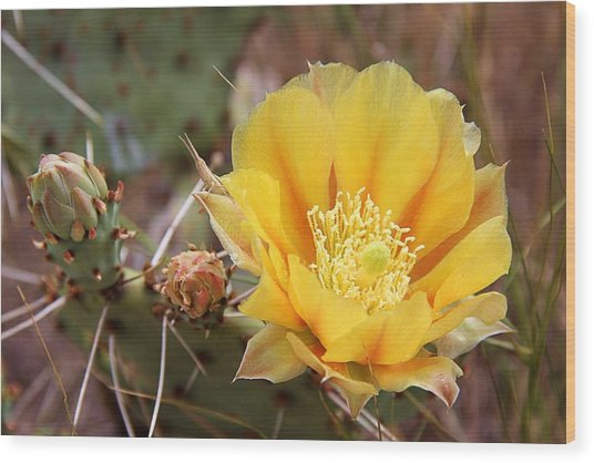 Texas Cactus Wood Print