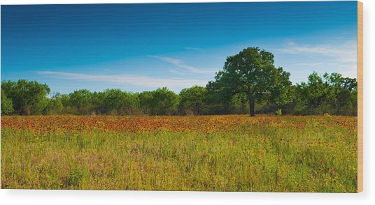 Texas Hill Country Meadow Wood Print