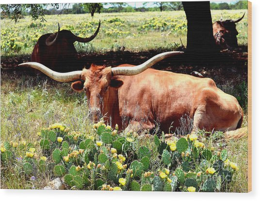 Texas Longhorns 2 Wood Print
