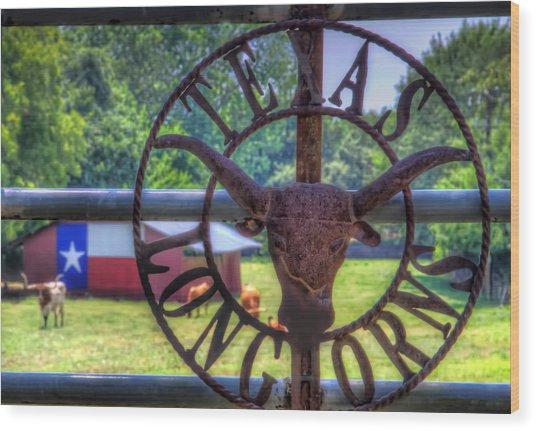 Texas Longhorns Wood Print