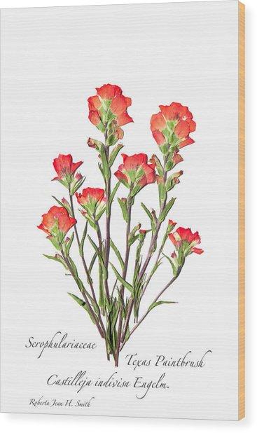 Texas Paintbrush 2 Wood Print