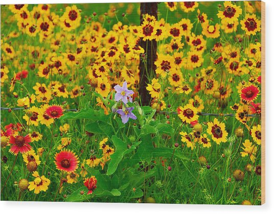 Texas Spring Delight Wood Print