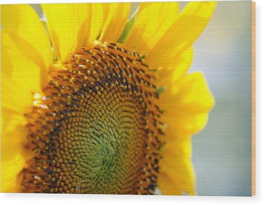 Texas Sunflower Wood Print