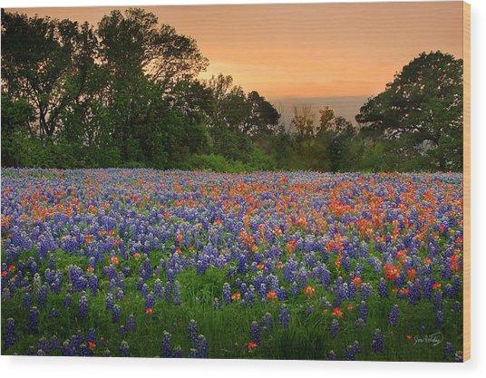 Texas Sunset - Bluebonnet Landscape Wildflowers Wood Print