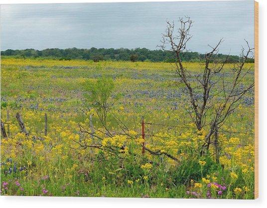 Texas Wildflowers And Mesquite Tree Wood Print
