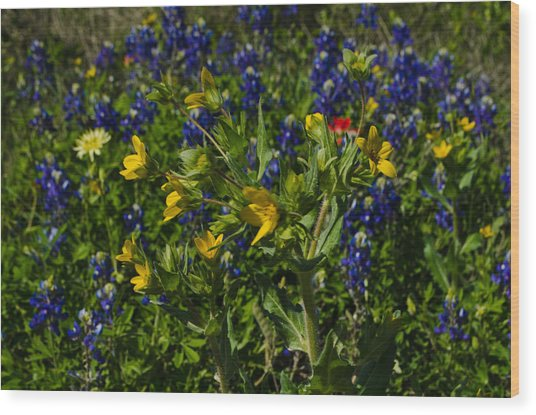 Texas Wildflowers Wood Print by Kelly Kitchens