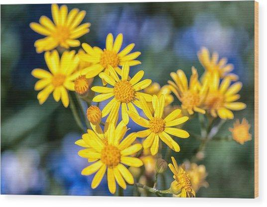 Texas Wildflowers 1 Wood Print