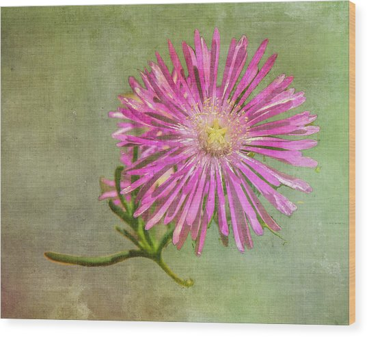Textured Daisy Wood Print