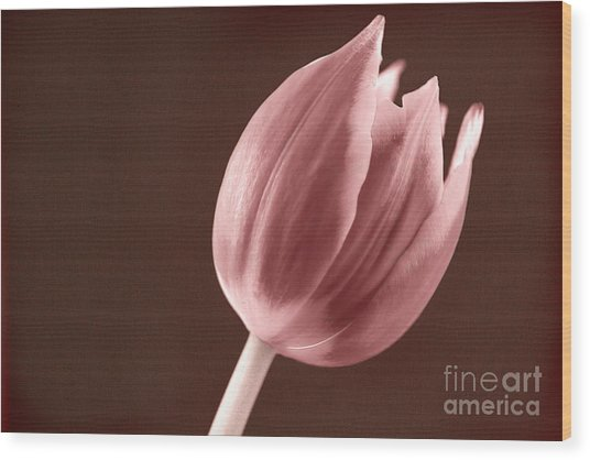 Textured Sepia Tulip Wood Print
