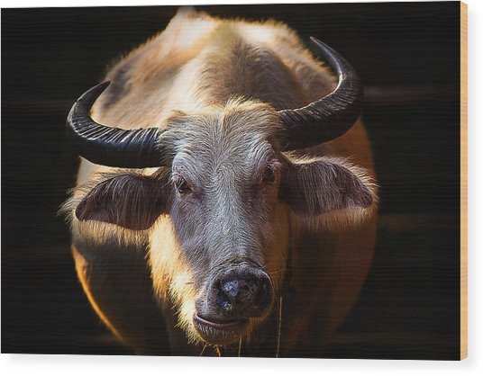 Thailand White Buffalo Wood Print by Arthit Somsakul