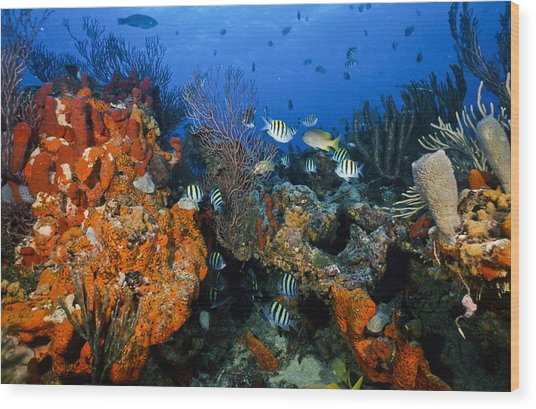 The Active Reef Wood Print