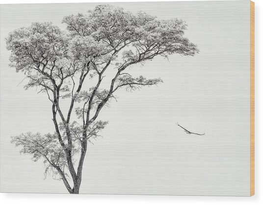 The African Eagle Wood Print