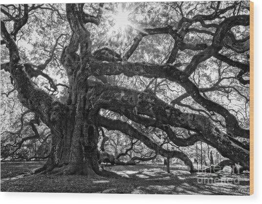 The Angel Oak Bw Wood Print
