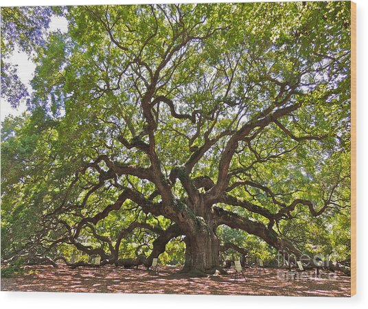 The Angel Tree Wood Print