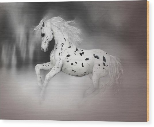 The Appaloosa Wood Print