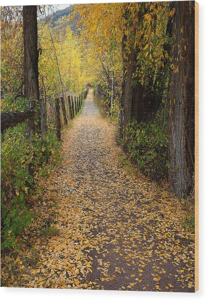 The Aspen Trail Wood Print